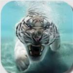 Тигры – живые обои