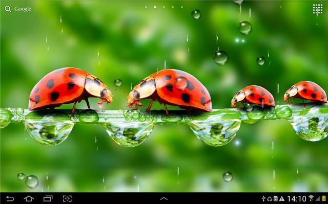Дождь Живые Обои